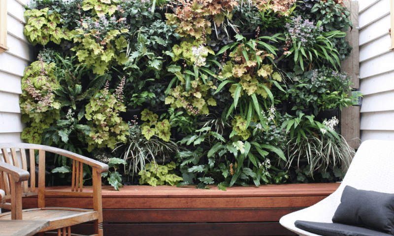 Greenwall display with a wide range of highly-adaptive plants on the patio.