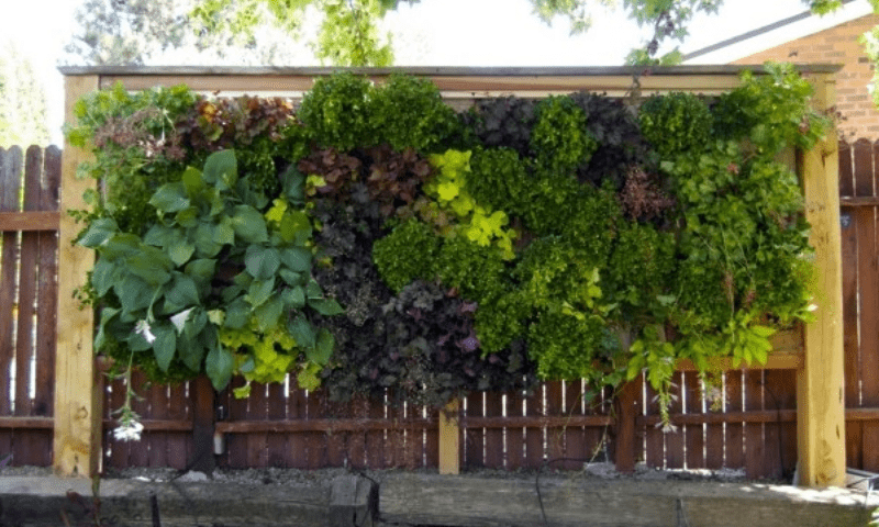 Vertical garden installed on a wooden fence.