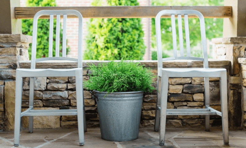 Two white chairs and a potted cypress