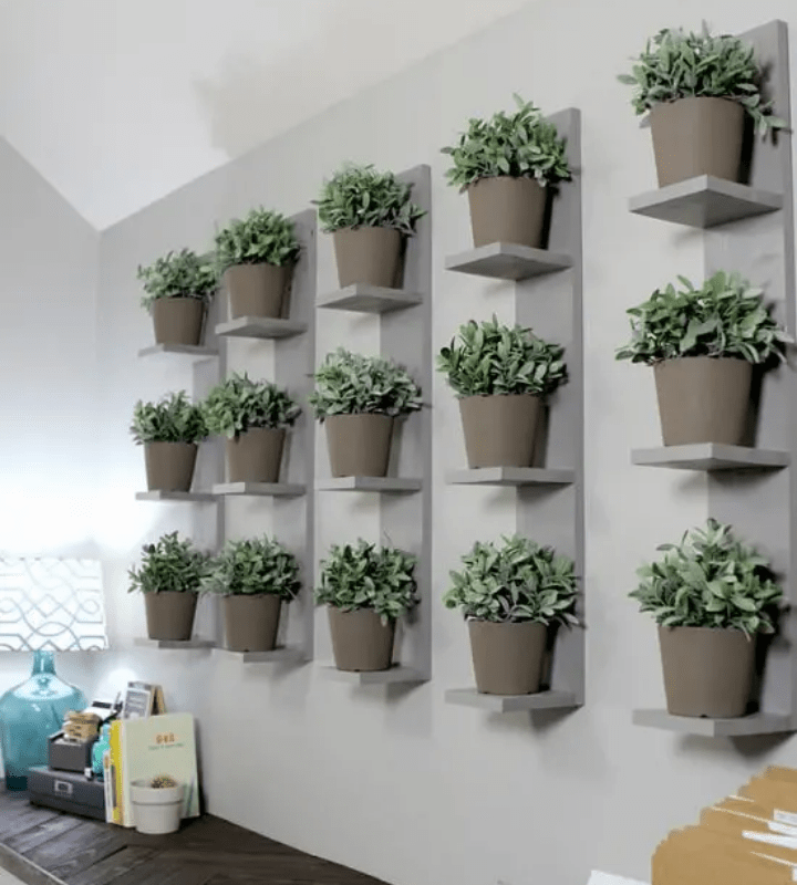 Wall-mounted shelves with potted plants in rows