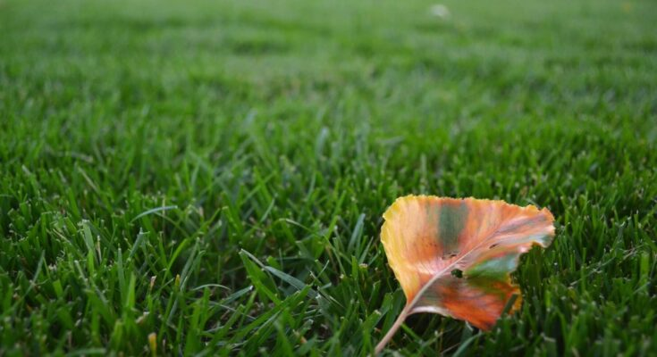 A lawn with an autumn leaf resting on it