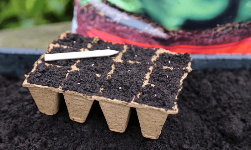 Seed starting potting mix in a carton egg tray
