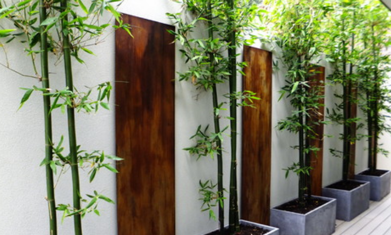 Potted bamboo trees in concrete planters with wooden planks in the wall display.