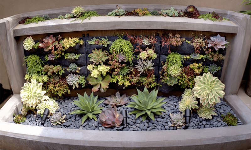Garden of succulents in a large concrete planter.