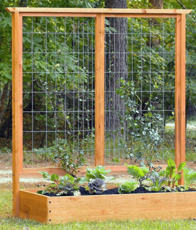 Raised bed with a built-in trellis