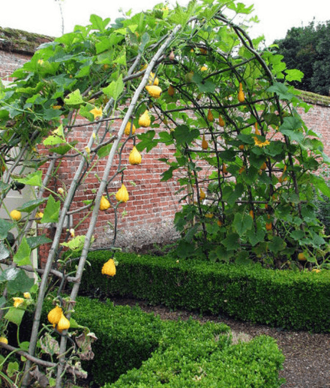 The whimsical arch branch trellis