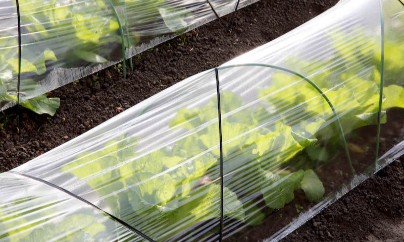 Plastic row covers in the garden to protect plants.