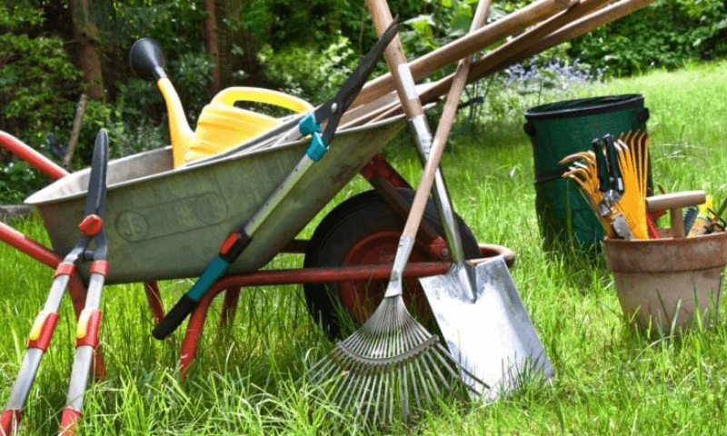 Drying cleaned and disinfected garden tools in the sun.