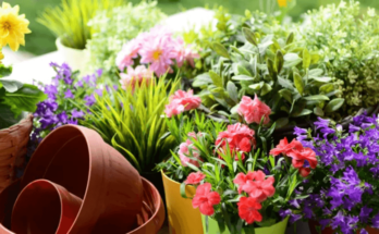 Empty plastic container pots placed next to the potted flowering plants.