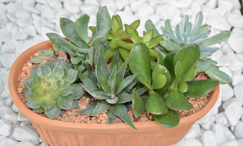 Varieties of succulents growing in a ceramic container pot.
