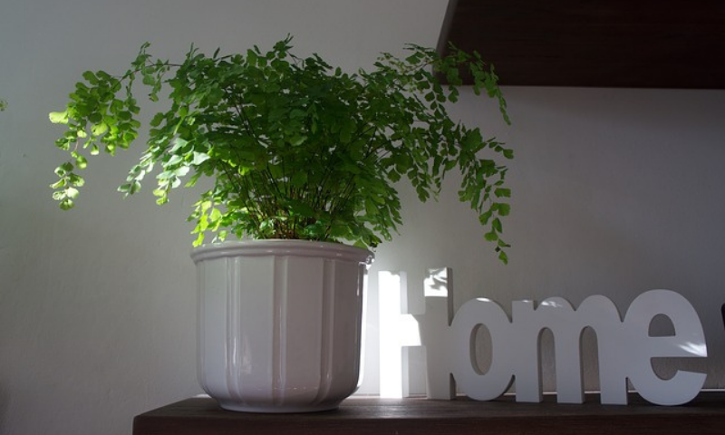 "A houseplant potted in a white ceramic container located at the corner table next to the word ""home""."