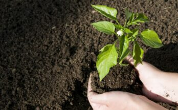 Topsoil with a plant