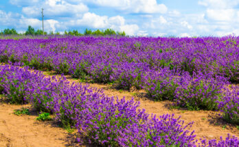 Beautiful Flowers in a Dry Environment