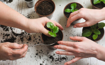 Two people placing a plant in a pot.